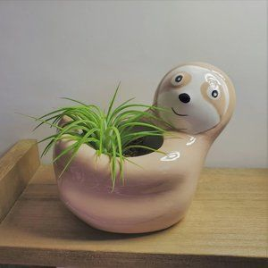 Other - Sloth Animal Planter with Air Plant